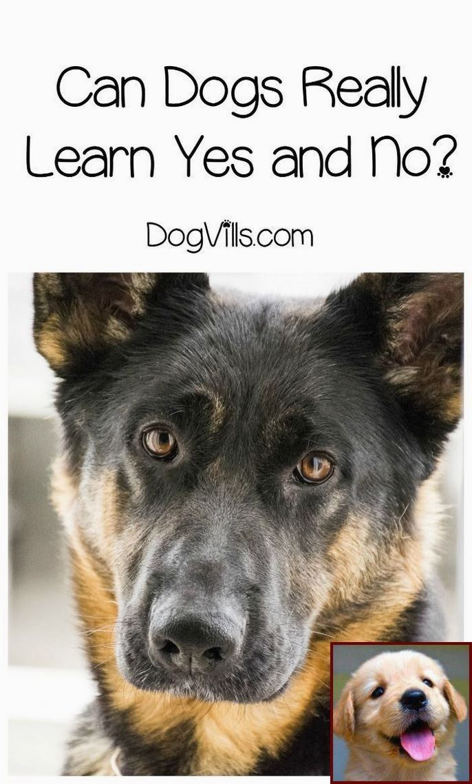 Committing The Time In Pet Dog Appropriate Training Will