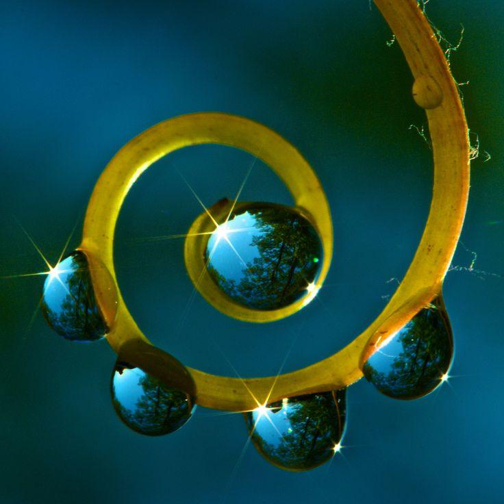 Fibonacci ForestForests, God Creations, Spirals, Waterdrop, Macro Photography, Mothers Nature, Dew Drop, Dewdrops, Water Droplets