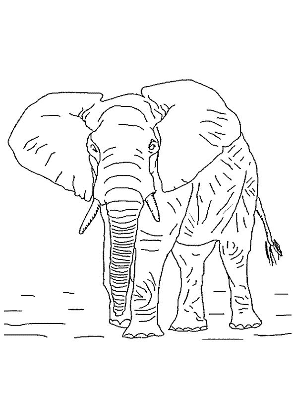374 meilleures id es du tableau coloriages animaux de la jungle et de la savane sur pinterest - Dessin d un elephant ...
