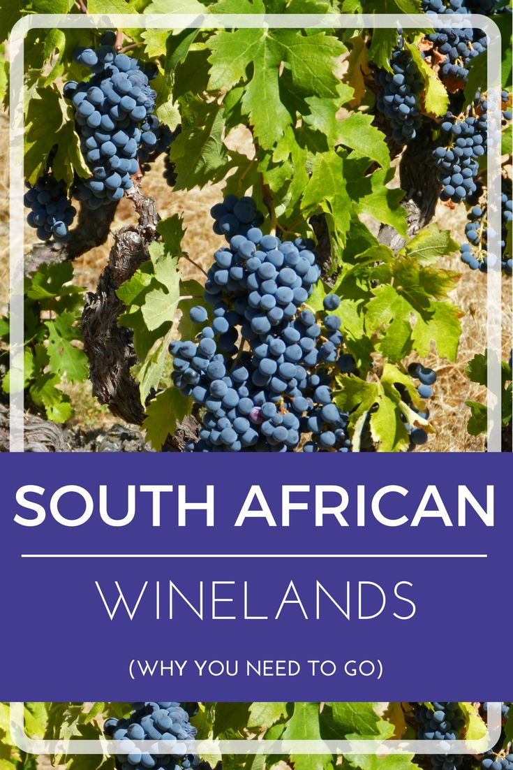 Do you love wine? Find out why South Africa is the destination of choice for wine, vineyards and relaxation.http://wp.me/p8lh3N-1K   Travel Tips   Destinations   Where to go 