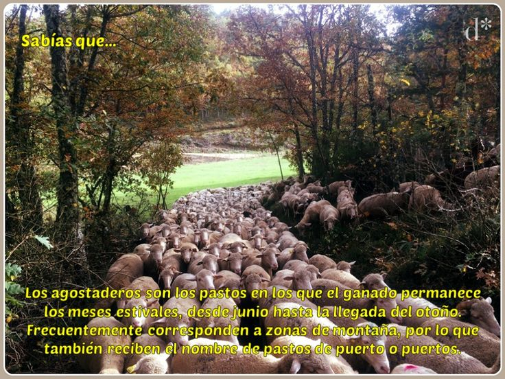 #Sabíasque... Comparte nuestra campaña para dar a conocer el mundo de la #oveja, la #lana y la #trashumancia