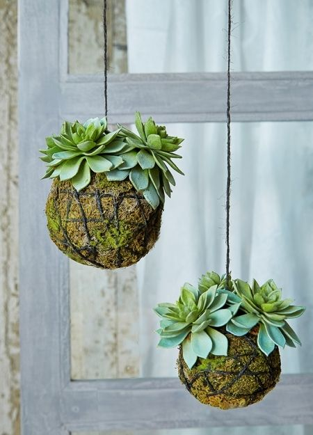 Succulents can work in hanging baskets, too. More house plant inspiration at www.redonline.co.uk