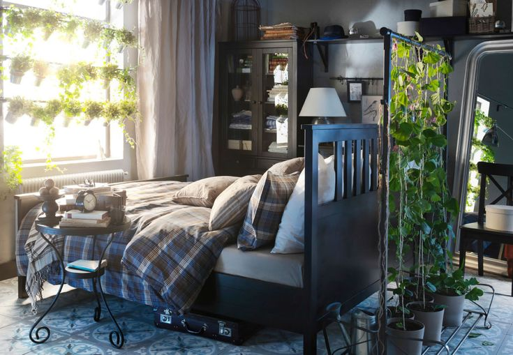 A black bed with chequered bed sheets and pillows in front of a window. On the window there are racks of green plants, and there are fines growing up the bed's headboard