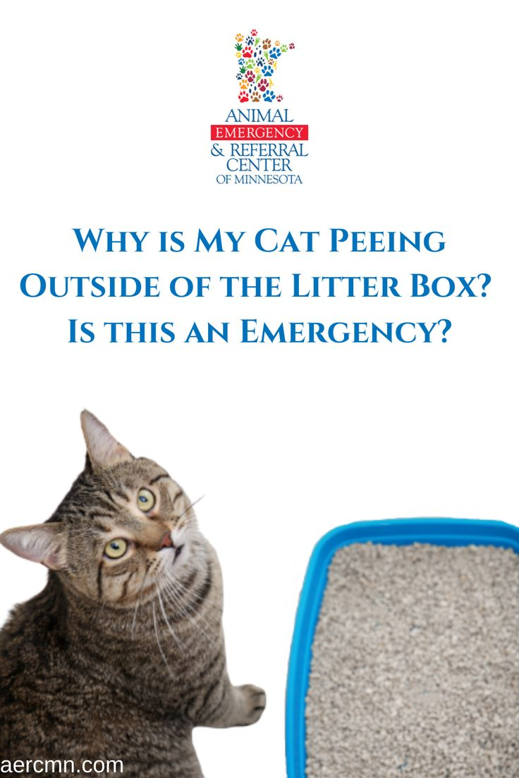 Why Is My Cat Peeing Outside Of The Litter Box Is This An Emergency In 2020 Cat Pee Cat Spray Litter Box