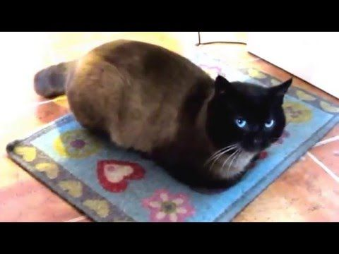 My CAT LOVE PARTY Songs Irene Serban Mp4