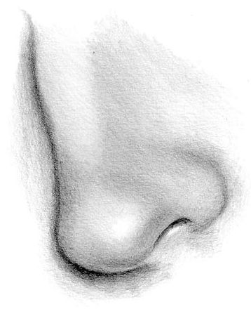 draw a nose step by step - Google Search