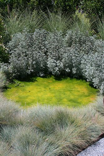 1742 best Gardening With Grasses images on Pinterest Ornamental