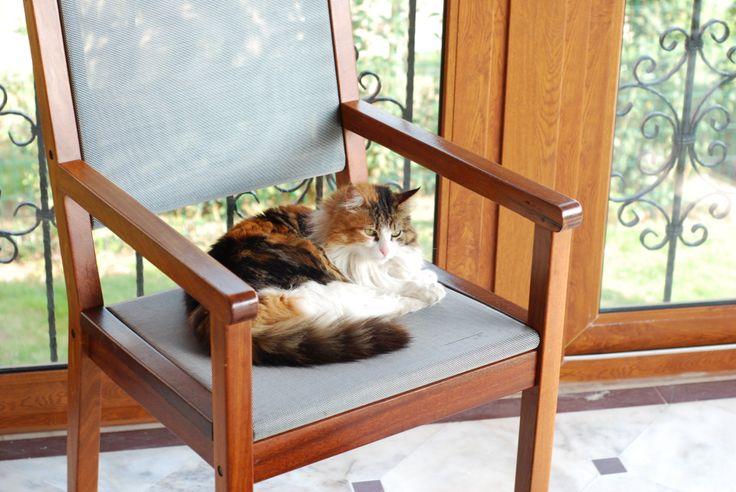 Azra the cat
