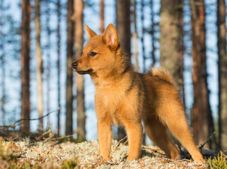 Top Rare Chubby Adorable Dog - a56580c4d744cda9a8c6051e55738574--cute-dogs-breeds-dog-breeds  2018_446331  .jpg
