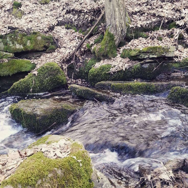 beauty of the moss