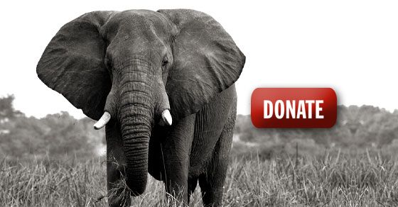 how to stop chinese ivory demand