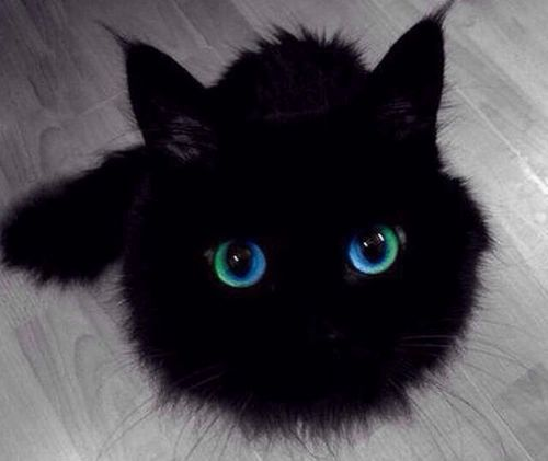 I think this cat is magical.  Are you sure that's a cat?  That looks more like a soot sprite.