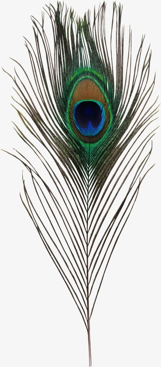 Peacock Feather Png Feather Feather Clipart Peacock Peacock Clipart Peacock Feather Peacock Feather Art Feather Painting Feather Art