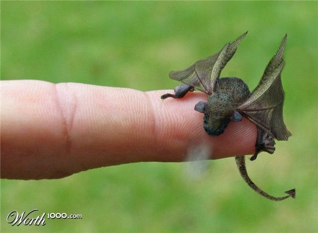 Another pet baby dragon. Awwww....