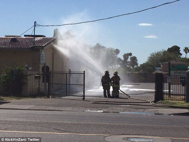 Foam: Firefighters coated the mosque with a foam to quell the bees. Killer bees, officially known as Africanized bees, are a particularly aggressive strain of bee
