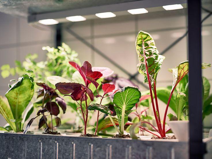 We naderen de winter en dat betekend dat de meeste groente en fruit niet meer buiten te kweken is door de kou. Maar daar heeft IKEA iets op bedacht!