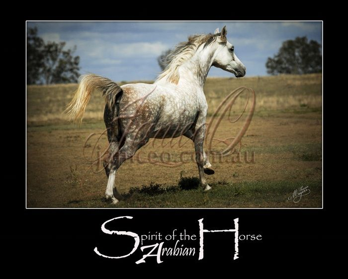 Run - Arabian mare enjoying a gallop in the sun. Inspirational wall art to brighten your home or office.