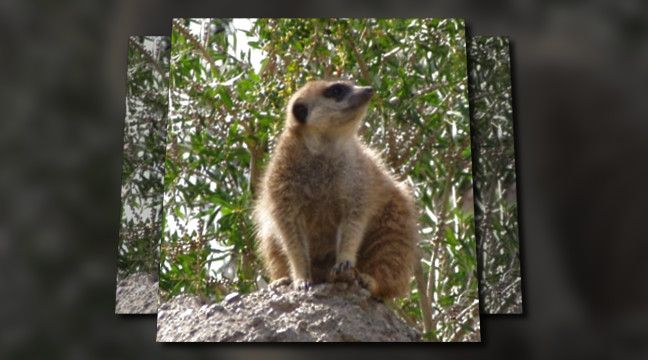 'Pest Control Balch Springs TX 214-504-2875 http://balch-springs-tx.costlesspestcontrol.com Ameri-Tech Termite Control'. Click to watch the video!