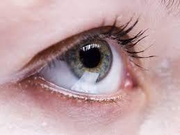Táto bylinka zlepšuje zrak dokonca aj u ľudí starších než 70 rokov | Domáca Medicína