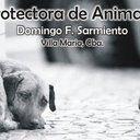 Pedimos que se dejen de utilizar a los perros de raza pitbull como maquinas asesinas o reproductivas. Que cese su explotación.