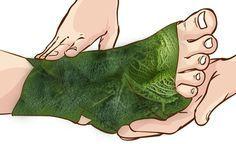 Листья капусты использовались на протяжении веков — пора вспомнить их удивительную целительную силу