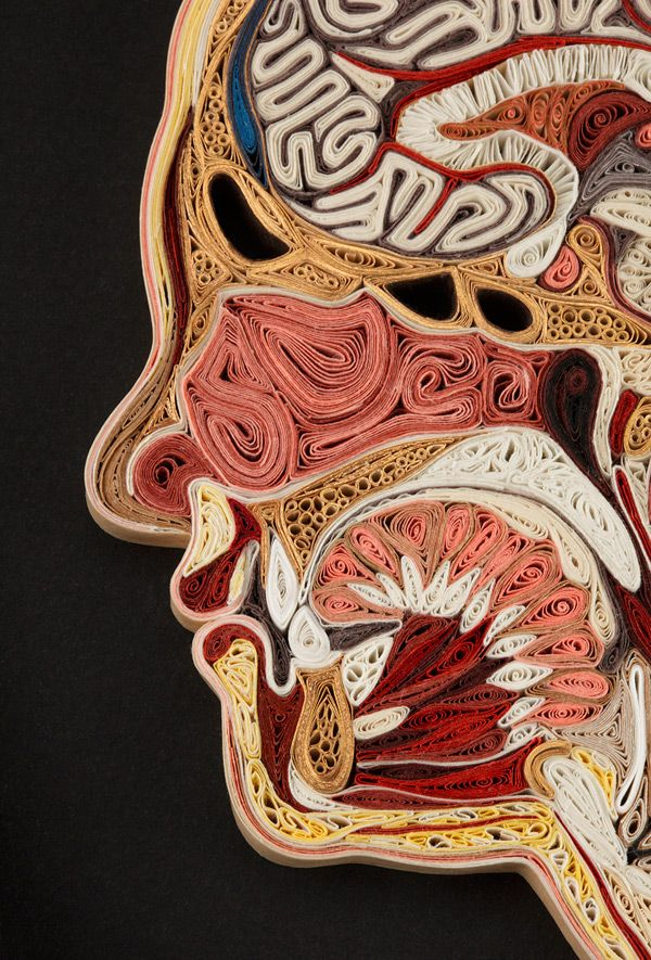 For her Tissue Series, artist Lisa Nilsson constructs anatomical cross sections of the human body using rolled pieces of Japanese mulberry paper, a technique known as quilling or paper filigree. Each piece takes several weeks to assemble and begins with an actual photograph of a la