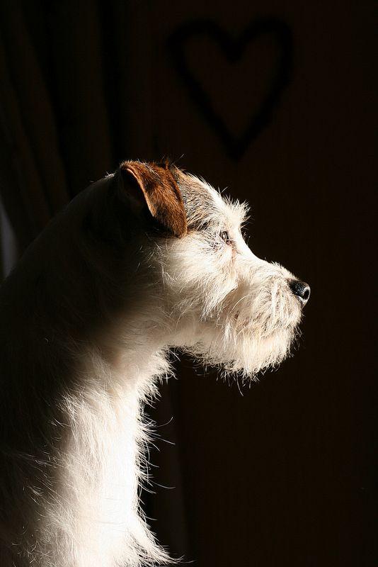 'Dave' enjoying the evening sunshine.