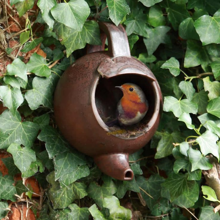 Teapot nester. Perfect for robins who prefer open nesting sites and often use man made objects. Place it within some greenery, 1-2 metres high. Secure the teapot using either malleable garden wire, passing it through the specially designed fixing holes and around the base of the handle, twist around a convienient branch or screw to a support through the hole in the base , taking care to only gently tighten against the included rubber washer.