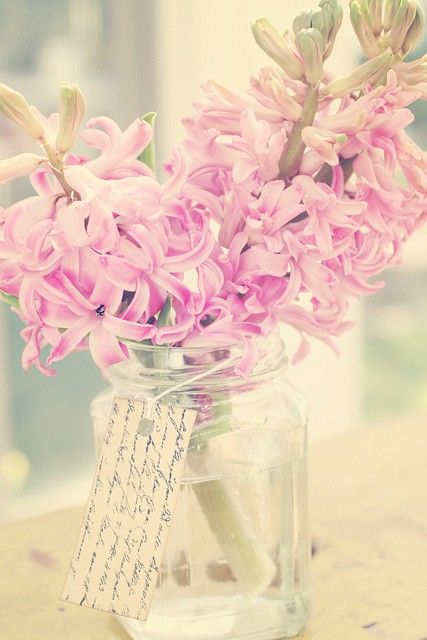.: Flowers Collection, Pink Flowers, Dreamy, Beautiful Obession3, Flowers Hyacinth, Photo, Hyacinth Colors Rose, Flowers Beautiful Flowers, Hyacinthcolor Rose