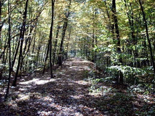 The 3 mile trail found at Browning Woods is a gorgeous hike alongside a lovely stream. The remains of the Browning Homestead are wonderful to explore along the trail found off Shannock Road.