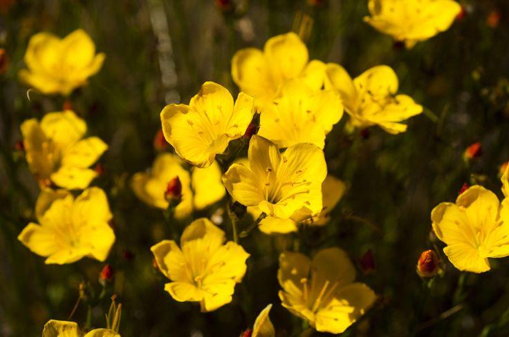 Flores silvestres de Rocas del Mar