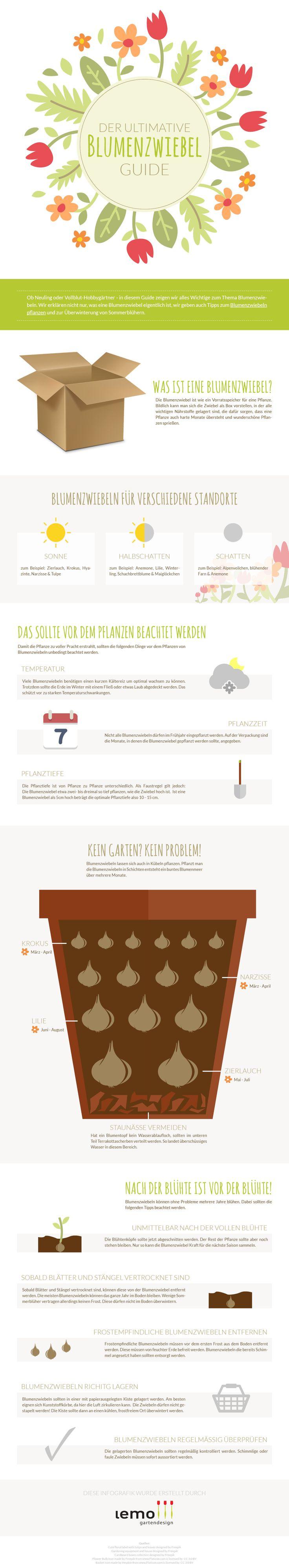 Infografik: Blumenzwiebeln pflanzen - Der ultimative Guide