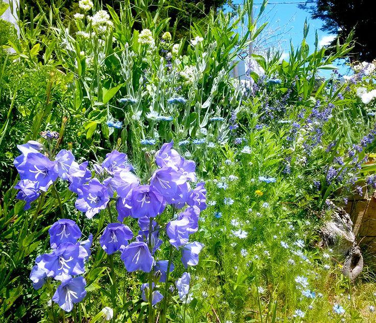 Oltre 1000 idee su jardin anglais su pinterest les plus for Pinterest jardin anglais