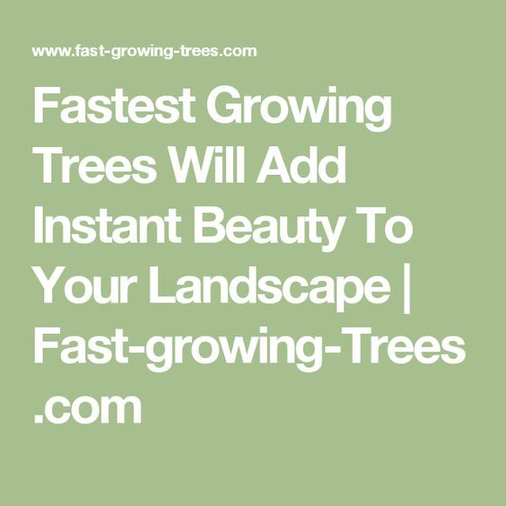 Fastest Growing Trees Will Add Instant Beauty To Your Landscape | Fast-growing-Trees.com