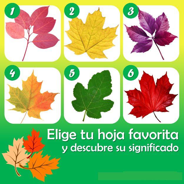 Las hojas de los árboles, además brindarnos sombra y de llenar el mundo de color, de acuerdo a su forma y características principale...