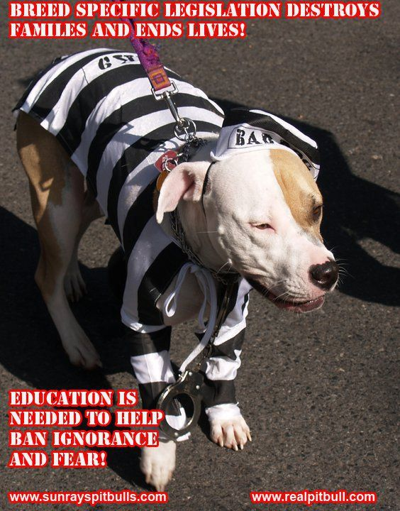 BSL Destroys... Sign it before 1/18 https://petitions.whitehouse.gov/petition/ban-and-outlaw-breed-specific-legislation-bsl-united-states-america-federal-level/d1WR0qcl