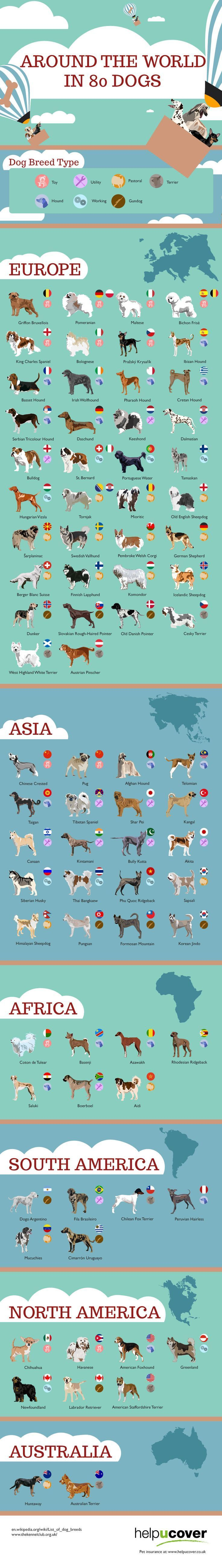 Around the World in 80 Dogs   #Dogs #Pets #infographic #doginfographic