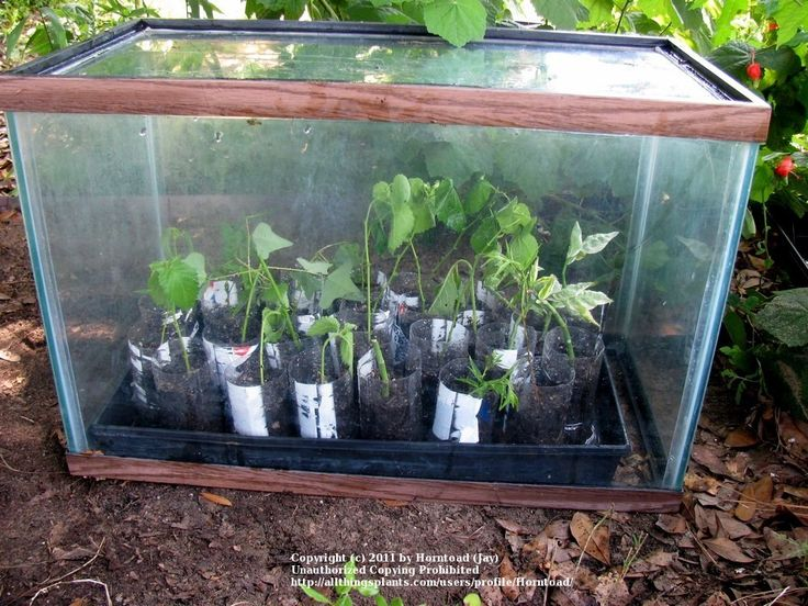 Best 25 mini greenhouse ideas on pinterest small for How to make a small indoor greenhouse