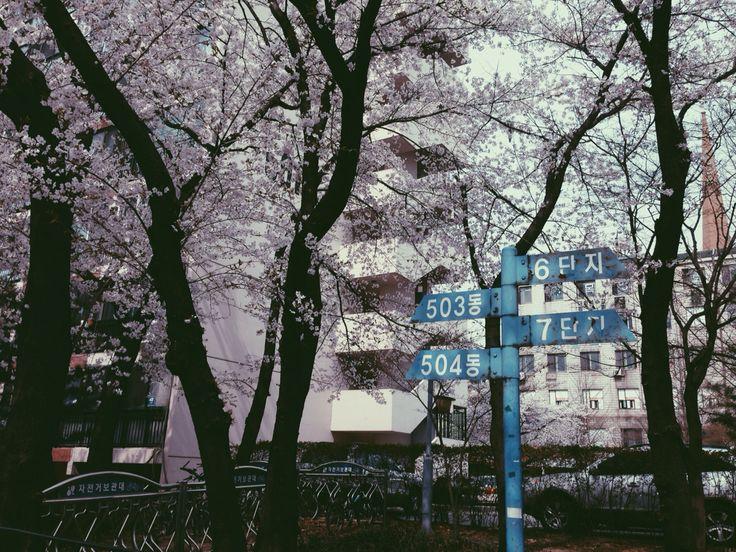 오래된 사진 느낌으로 효과를 줘 본 5단지 벚꽃. 개포동 봄.