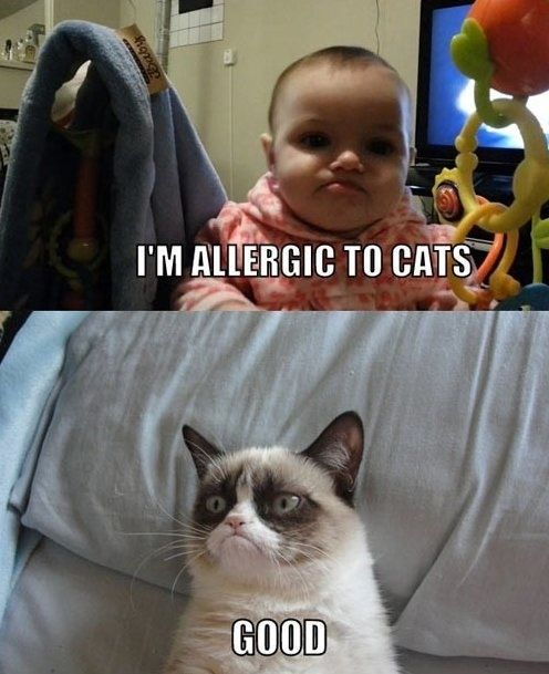 grumpy cat likes this kid because the kid is allergic to cats