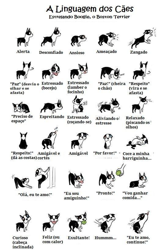 20 dicas para cuidar dos cães