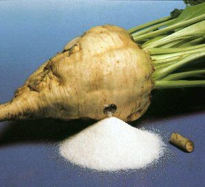 How to make sugar from beets