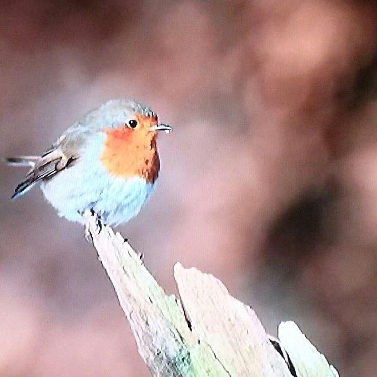 Petit rouge dans la forêt 🌳🍀 birds