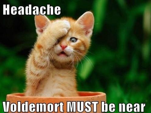 Harry PotterAdorable Fur, Kittens Sitting, Facebook Fans, Origami Owls Online Parties, Orange Kittens, Cat Lovers, Luxury Hotels, Dreams Cars, Animal