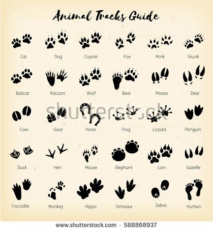 Animal tracks - foot print guide  african, animal, art, background, bear, bird, black, cat, chicken, claw, collection, crocodile, deer, dog, duck, elephant, foot, footprint, forest, fox, frog, graphic, hoof, horse, icon, illustration, isolated, lion, mammal, monkey, moose, mouse, nature, outline, paw, print, set, shape, sign, silhouette, skunk, symbol, trace, track, trail, walk, wild, wildlife, wolf, vector