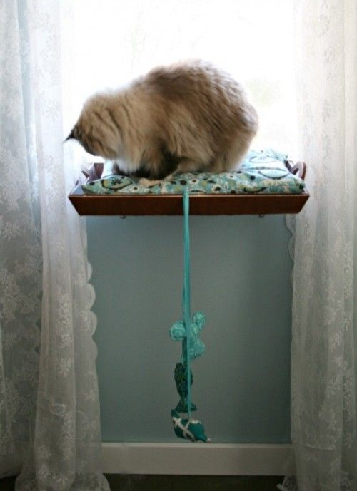 Window bed for your kitty. Love this idea. Our cats always lay in the window and pull my curtains down...