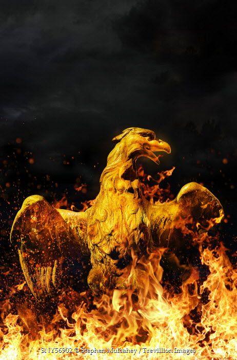 Stephen Mulcahey BURNING PHOENIX RISING FROM THE FLAMES Birds