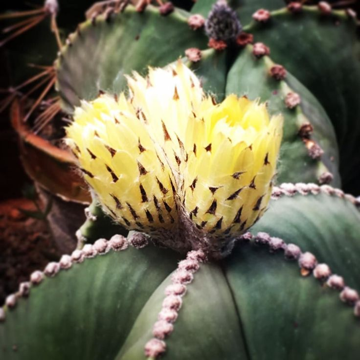Июнь тот месяц когда цветут кактусы.