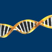 Blurring the Lines Between Germline and Somatic Mutations in Cancer http://ift.tt/2ty6cU9