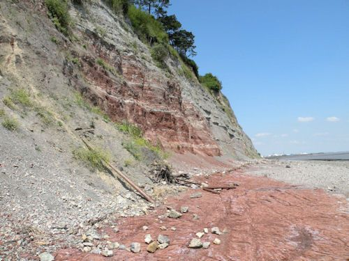 Penarth fossils and fossil collecting
